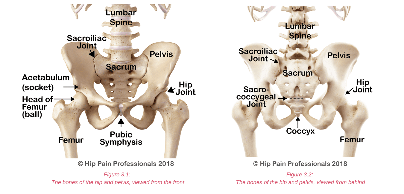Hip Pain Explained - including structures & anatomy of the hip and pelvis.