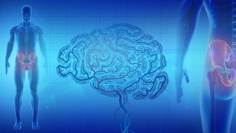 what is pain - signals between the body and brain
