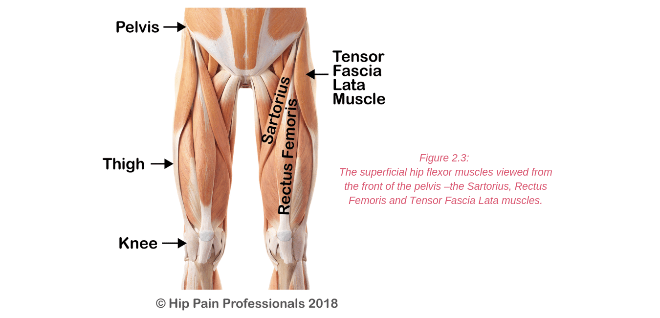 Anterior Hip Pain Pain At The Front Of The Hip