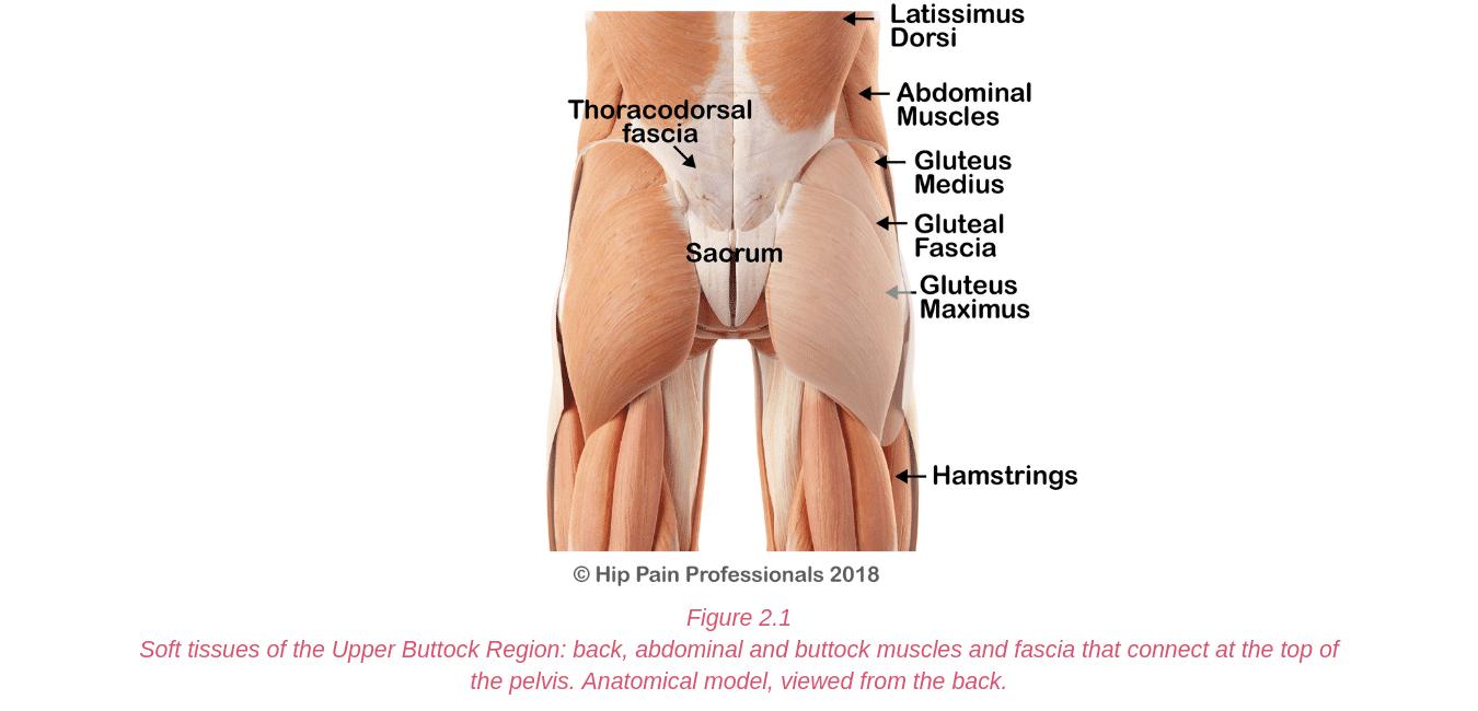 Upper Buttock Pain Sacro Illiac Joint Area Pain