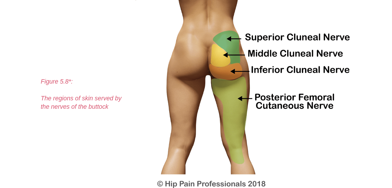 Hip Pain Explained Including Structures Anatomy Of The Hip And Pelvis