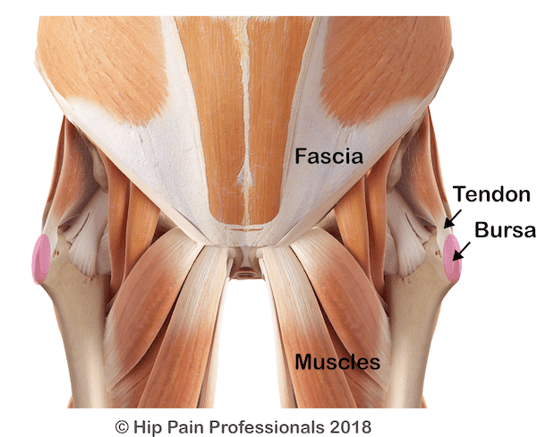 Soft tissue structures muscles, tendons, bursa, fascia of the hip and pelvis