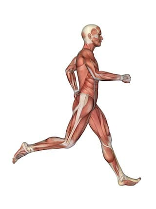 soft tissue structures of the hip and pelvis in running man