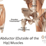 Hip Abductor muscles muscles on the outside of the hip