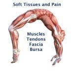 soft tissue pain muscle tendon fascia bursa