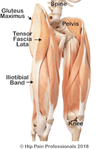 anatomy of the outside of the hip, ITB, TFL and Gluteus maximus
