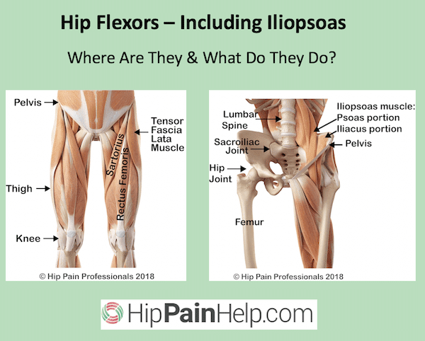 hip flexor pain and iliopsoas pain. what are the hip flexor and iliopsoas muscles
