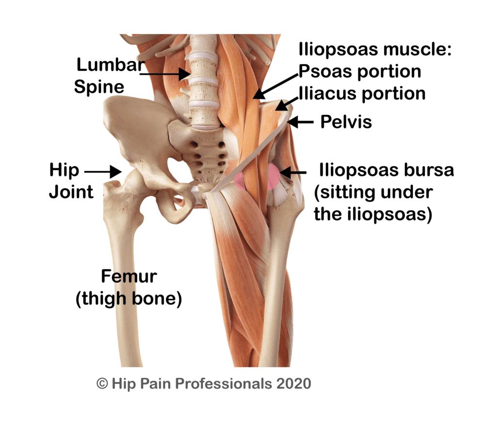Hip flexor or iliopsoas related groin pain anatomy