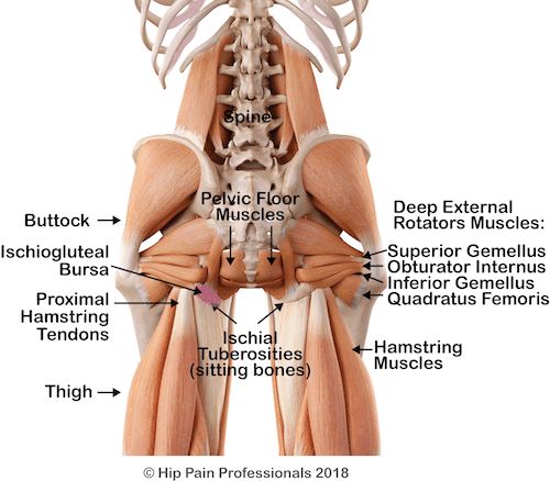 Deep muscles of the Lower Buttock and possiple causes of lower buttck pain