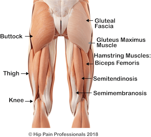 Lower Buttock Muscles and possible cuases of lower buttock pain including gluteus Maximus and hamstring