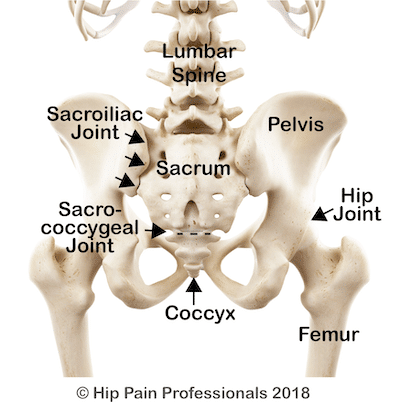 SIJ pain can occur at the SIJ anatomy of the pelvis from the back