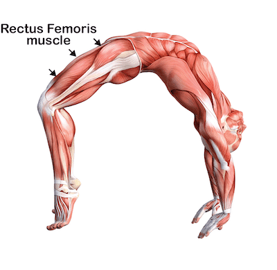 A position of hip extension (thigh moving backwards) and knee flexion (knee bend). This position places the hp flexor muscles, and particularly the rectus femoris, on high stretch. High loads are placed on the boney growth centres at the muscle attachments to the front of the pelvis and the lesser trochanter of the femur (thigh bone).