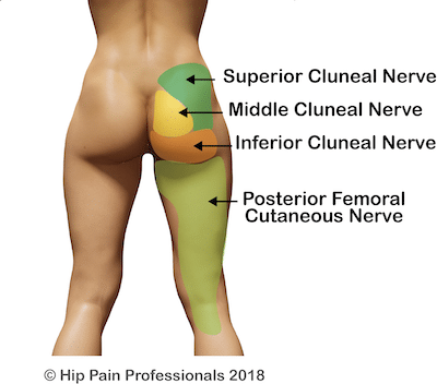 The regions of skin served by the cluneal nerves of the buttock and the posterior femoral cutaneous nerve that supplies sensation to the skin of the back of the thigh.
